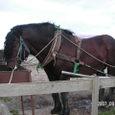 ラオウの馬
